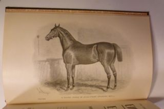 Elliman's Embrocation For Horses, Dogs, Birds, Cattle