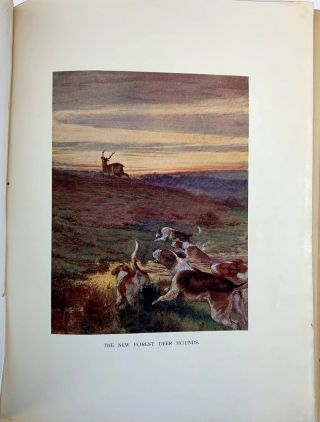 """The Roedeer. A Monograph, By """"SNAFFLE"""""""